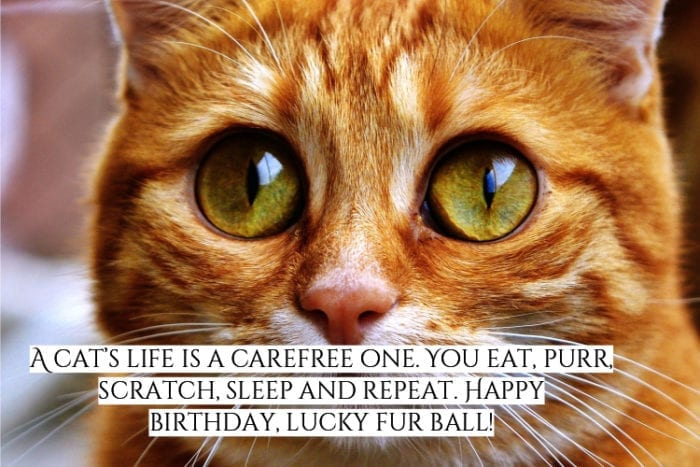 Cat happy birthday meme