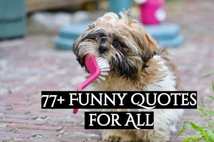 77+ funny quotes for all