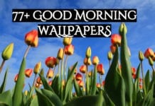 77 + good morning wallpapers