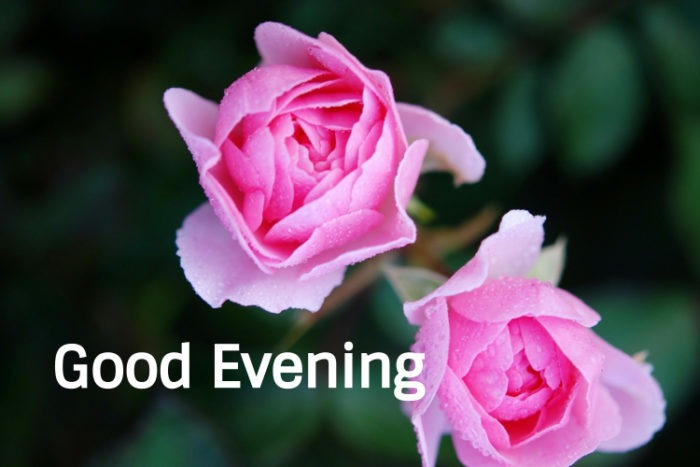 77 Good Evening Images Photos Greetings And Pics