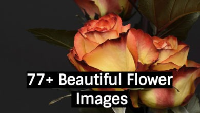 77+ Beautiful Flower Images