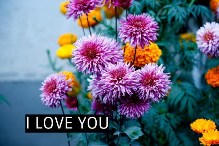 LOVE FLOWER IMAGES