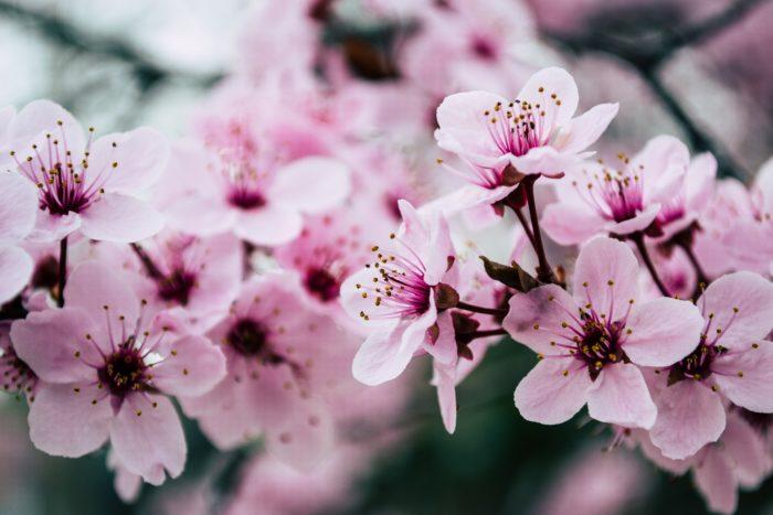 Flower Images for  Wallpaper
