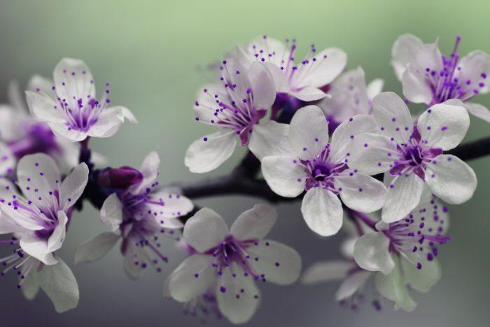 White flower images